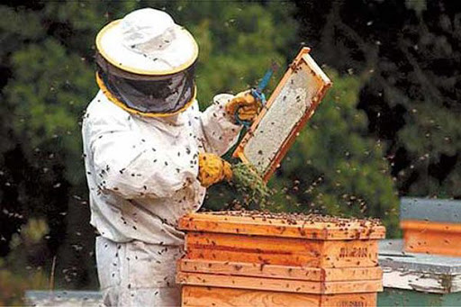 Los apicultores andaluces podrán solicitar las ayudas de forma telemática